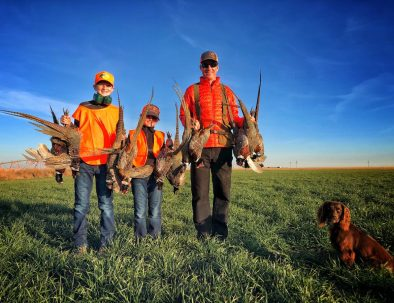 Tule Creek Outfitters | Texas Guided Bird Hunts | Pheasant