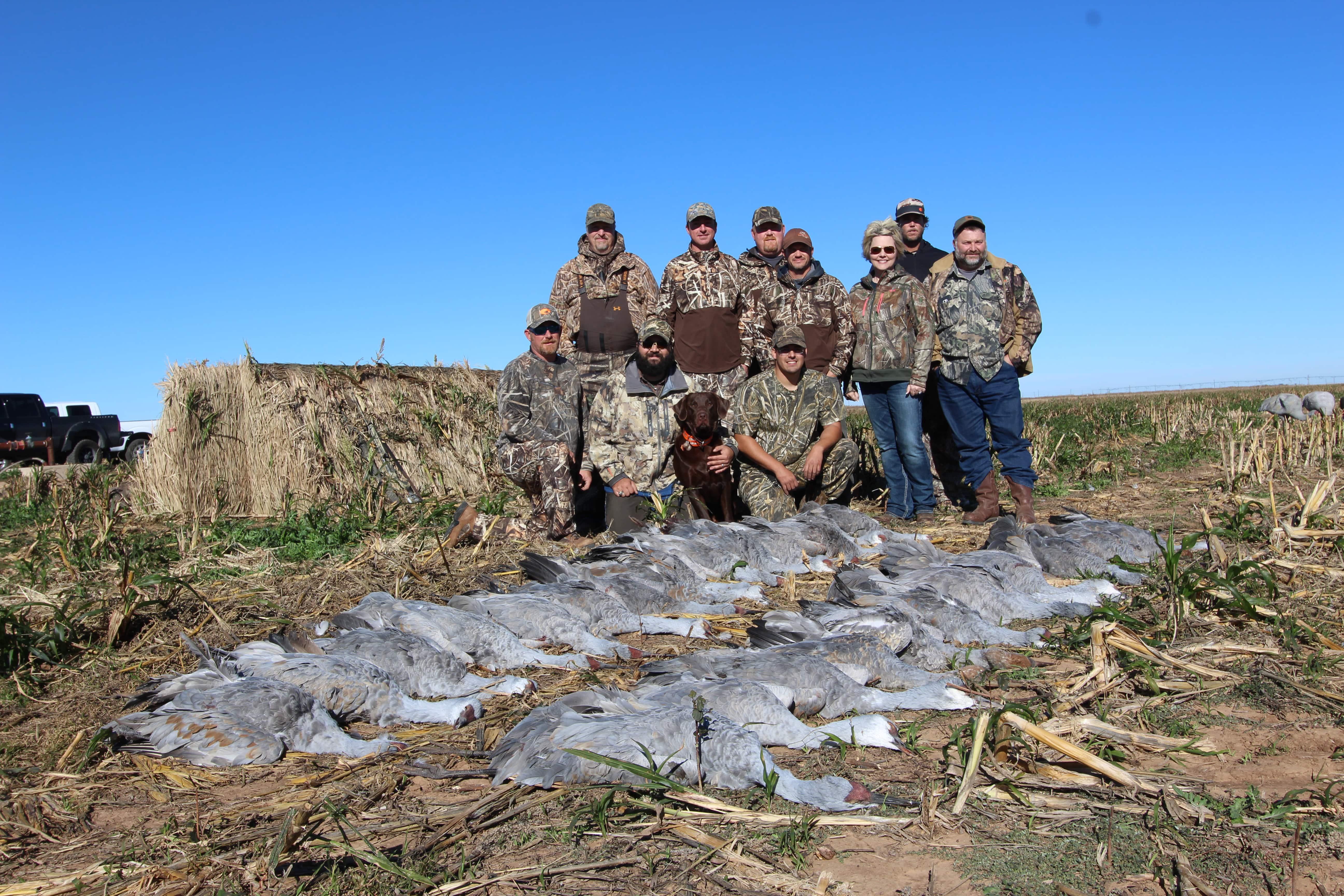 Sandhill Crane Hunts Tule Creek Outfitters